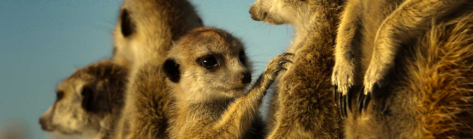 SliderMeerkat